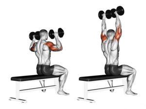Упражнение жим гантелей сидя